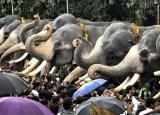 Njangattiri Aanayoottu Festival: 'Feeding of elephants' is just another reason to visit Kerala in July!