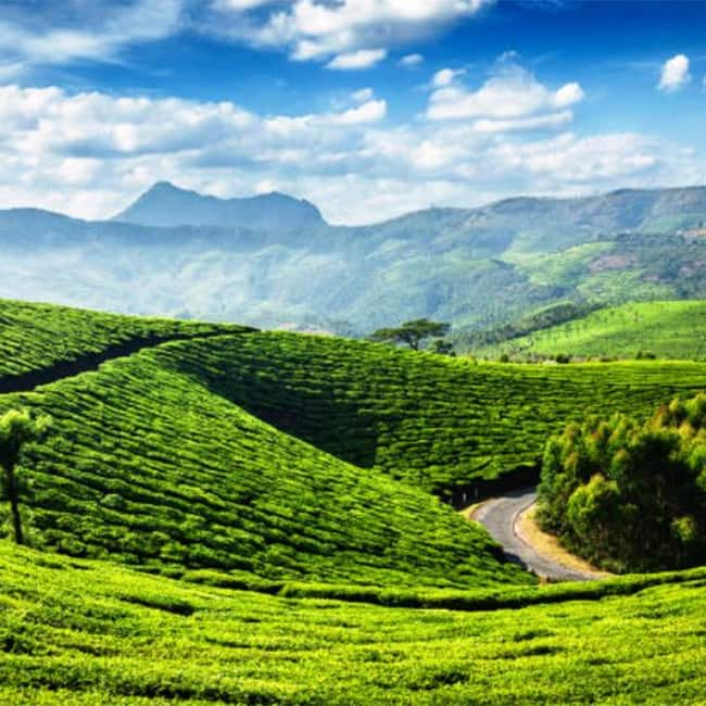 An alluring picture of Munnar