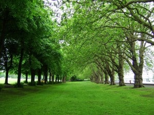 Top 9 greenest cities of India