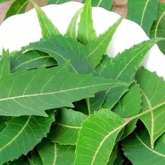 Curry leaves or Kadi patta helps in curing diarrhoea