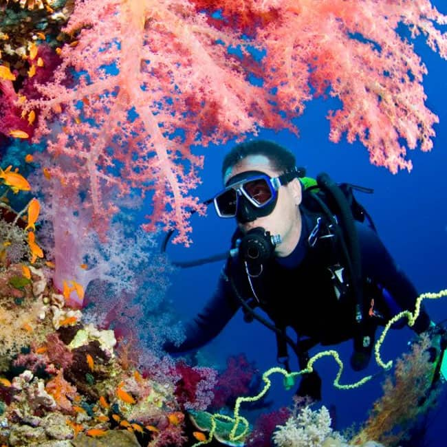 Best Island For Scuba Diving In Andaman