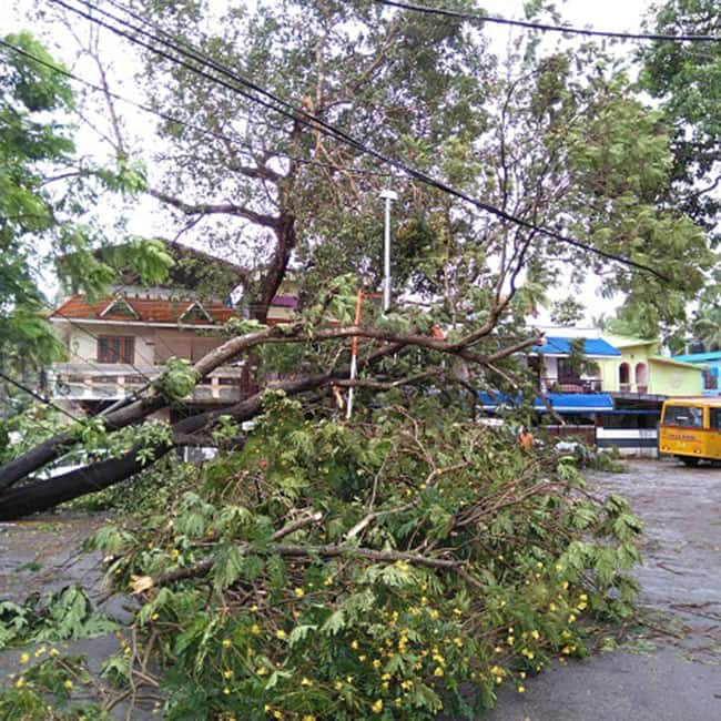 Trees uprooted in Thiruvananthapuram due to Cyclone Ockhi