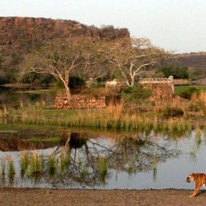 Visit Ranthambore In Rajasthan In The Month Of March 6 Best Places To Visit In India In The