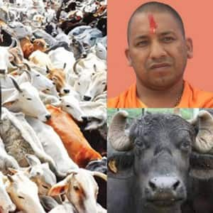 8 reasons why UP is chanting Yogi! Yogi Adityanath's name after he took over as Chief Minister!