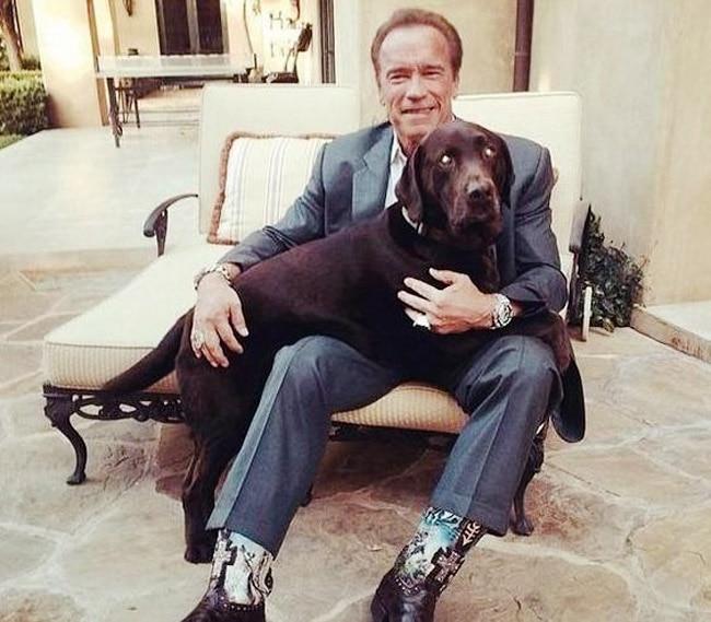 Arnold Schwarzenegger   s Whiskey And Pony