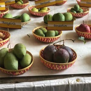 Delhi International Mango Festival 2018: Check out this Season's Aam in the Capital