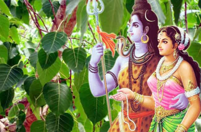 Gracy Singh explains the importance of celebrating Teej in Hindi culture
