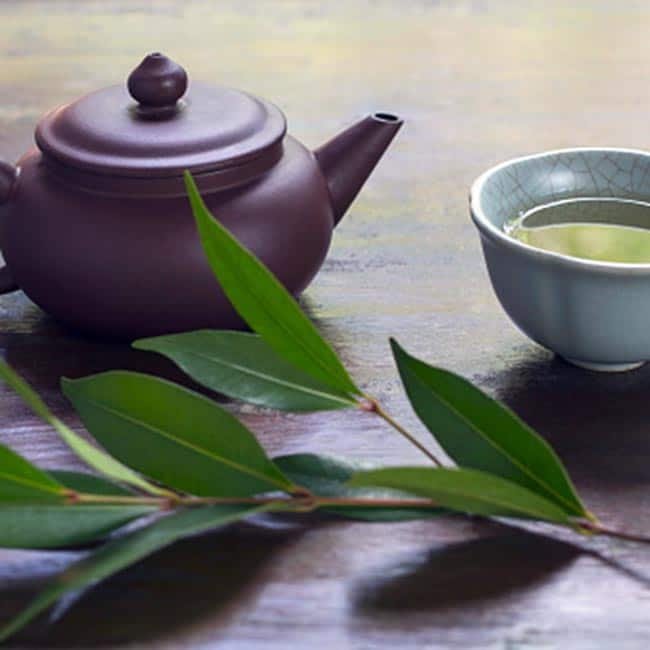 Green tea contains epigallocatechin boosts your metabolic rate
