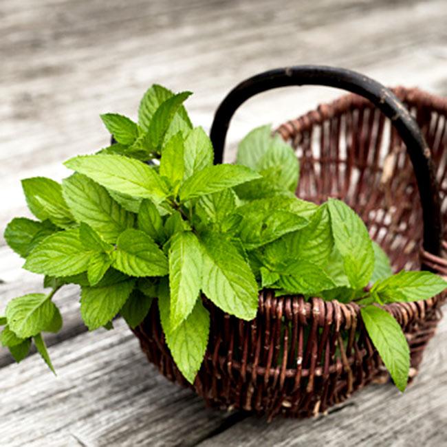 Mint leaves help to get rid of dark circles