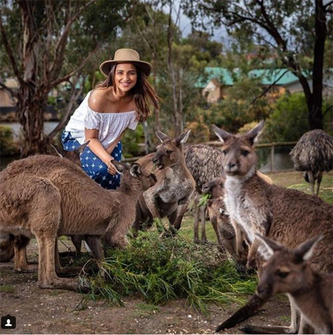 Parineeti Chopra poses with the kangaroos in Australia