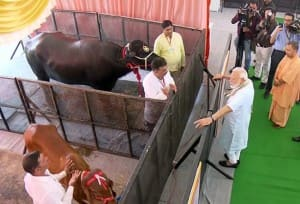 PM Modi Launches National Animal Disease Control Programme in Mathura | See PICS