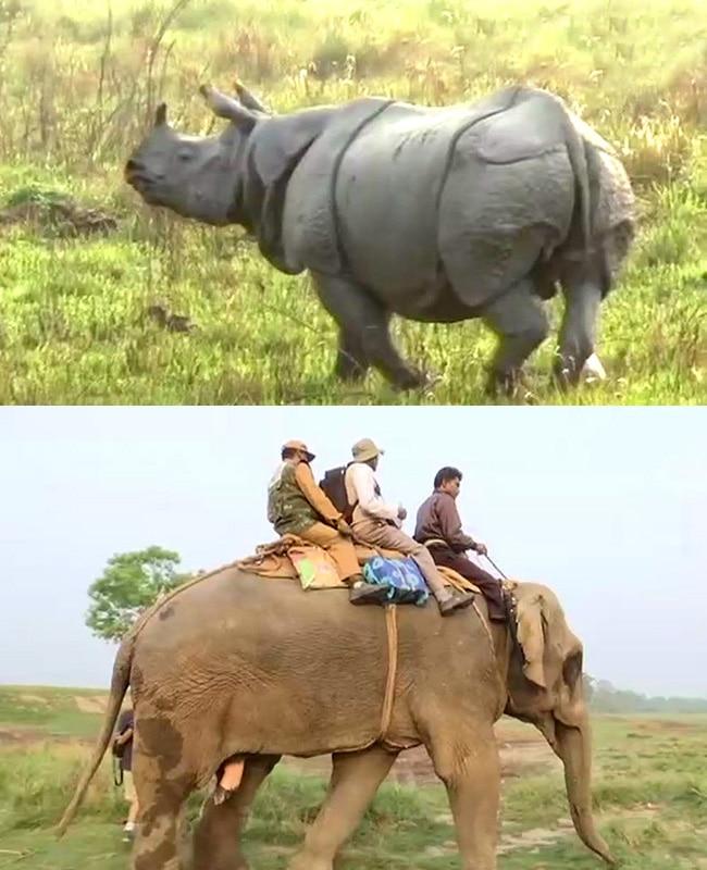 Rhinoceros census exercise starts in Kaziranga National Park