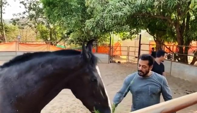 Salman Khan Eats Grass Along With His horse