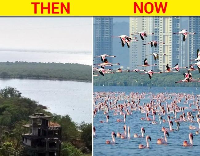 Talawe Wet Land  Mumbai