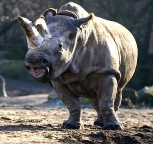 Ten most amazing animals that recently got EXTINCT